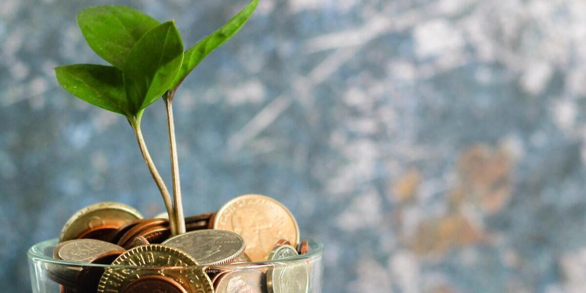Grön planta som växer uppåt på en bädd av mynt.